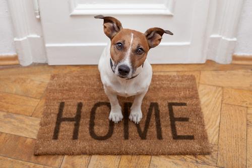 Huishoudens met huisdieren verbruiken meer energie